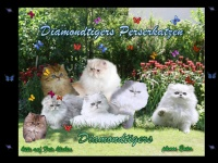 diamondtigers.de
