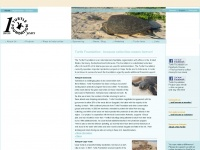 turtle-foundation.org