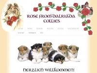 rosefromdalriada-collies.de