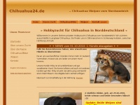 chihuahuas-hamburg.de