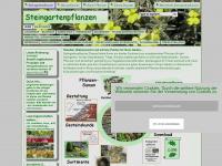 Steingartenpflanzen dressel onlineshop - Winterharte steingartenpflanzen ...