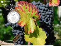 vinumberneck.ch