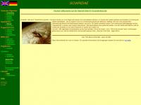 sciaridae.de