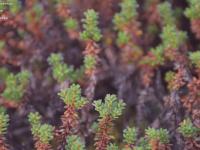 Harkila.se - Härkilas Kennel & Härkila Kläder - drever, jämthund, finsk stövare, jaktkläder, utrustning, tillbehör