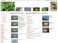 Bilder und Fotos von Tieren - Tier-fotos.eu