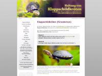 Klappschildkröte (Kinosternon) / Moschusschildkröte (Sternotherus) Haltung, Schlammschildkröten, Kinosternidae, Kinonsterniden