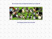 agility-jumper.de