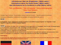 Ringelnatter.net - Informationen über die Ringelnatter (Natrix natrix)