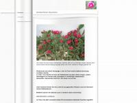 kaktusjohn.de Thumbnail