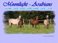 moonlight-arabians.de