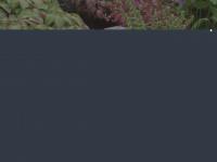 schattenpflanzen pflanzen f r. Black Bedroom Furniture Sets. Home Design Ideas