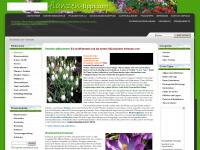 pflanzen-tipps.com