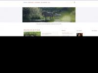 igfjordpferd.de