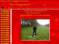 kleiner-muensterlaender.com