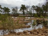 3somie21.de Webseite Vorschau