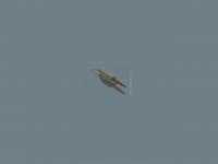 wettkampfklettern-sachsen.de