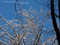 heinz-grunder.ch