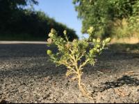 d-kl.net