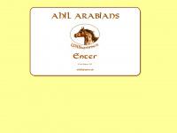 Ahil-arabians.de