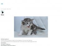 Norwegische-waldkatzen-bayern.de