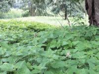 m4lik.de Webseite Vorschau