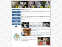 kitos.at Webseite Vorschau