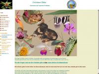 orchideen-bilder.de