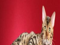 belrouge.com