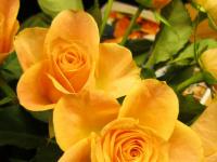 akaho.ch Webseite Vorschau