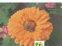 baubiologie-goetz.de