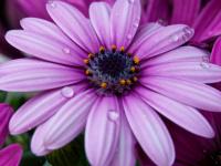 deobald.org