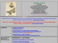 brahmaeidae-mundi.de