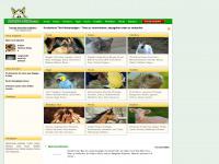 online-tiere.com