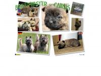 braintwister-cairns.de
