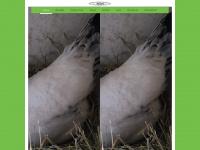 c66groetzingen.de Webseite Vorschau