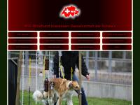 windhund-interessengemeinschaft.ch