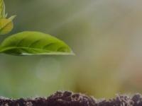 kgv-magdeburger-tor.de