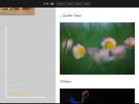 kiwikatze.de Webseite Vorschau