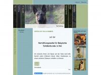 vermittlungsseite-fuer-belgische-schaeferhunde-in-not.de
