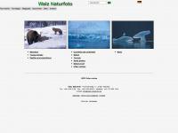walz-naturfoto.com