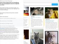 katzen-kleinanzeigen.net