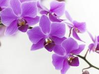 unitas-ostfalia.org Thumbnail