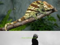 tropicfauna.de
