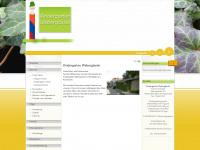 kiga-webergaessle.de Webseite Vorschau