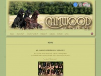 Camwood.ch