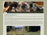 reunion-malinois.pl
