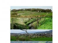 zunftaesch.ch Thumbnail